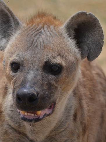 Hinckley Photo Centre | Hyena