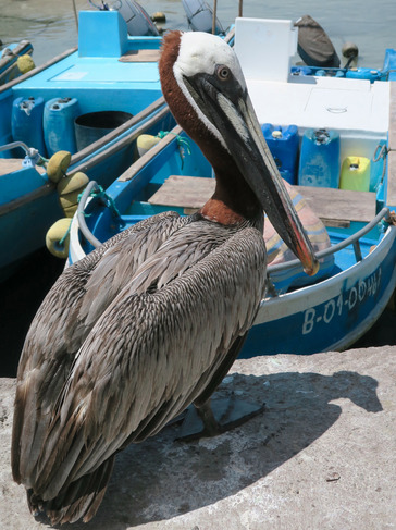 Hinckley Photo Centre | Pelican